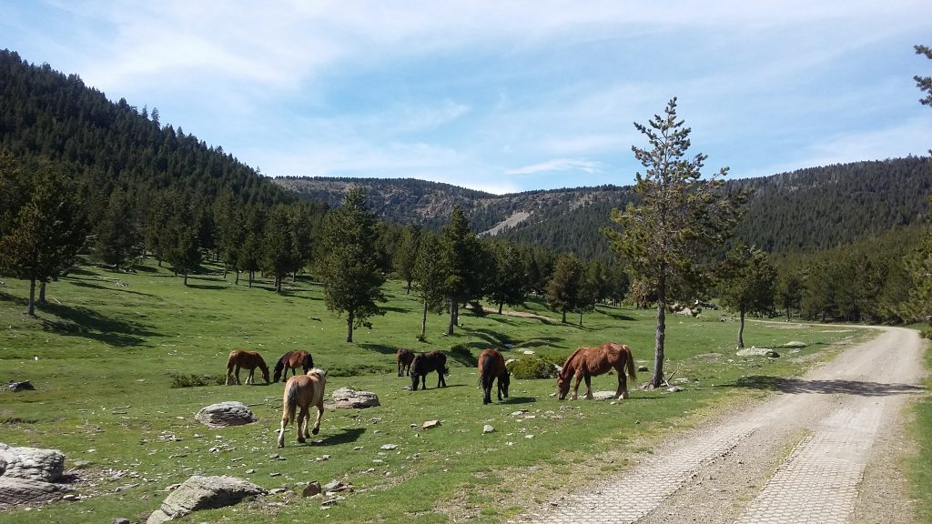 comes de rubio El massis de l'orri Rutas en 4x4 Pallars Sobira