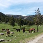 El massís de l'Orri a vista de cabirol Rutas en 4×4 Pallars Sobira