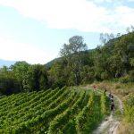 """""""Biu"""" un Tros de Sort. Ruta de vinos, paisajes y quesos"""