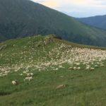 llesui ruta el mirador 25/2000 en 4x4 Pallars Sobira